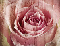 Old  Grunge background with rose Royalty Free Stock Photography