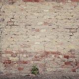 Old grunge brick wall Royalty Free Stock Photos