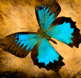 Old grunge butterfly. Paper texture background royalty free stock photography