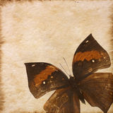 Old grunge butterfly paper texture Stock Photos