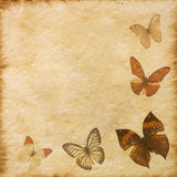 Old grunge butterfly paper texture Royalty Free Stock Images