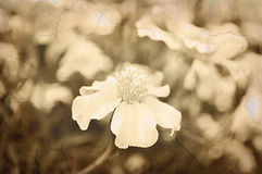 Old grunge floral background. Stock Photos