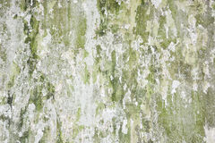 Old grunge green concrete wall Royalty Free Stock Photography