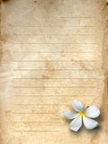 Old grunge letter paper. White flower print Royalty Free Stock Photography