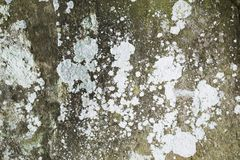 Old grunge natural textured stone background Stock Images