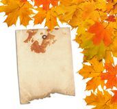 Old grunge paper with autumn maple branch leaves Stock Images