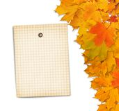 Old grunge paper with autumn maple branch leaves Stock Photos