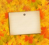Old grunge paper with autumn maple leaves Royalty Free Stock Images