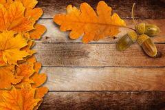 Old grunge paper with autumn oak leaves and acorns Royalty Free Stock Images