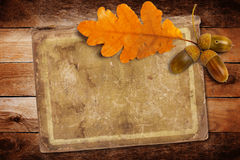 Old grunge paper with autumn oak leaves and acorns Stock Images
