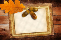 Old grunge paper with autumn oak leaves and acorns Stock Photos