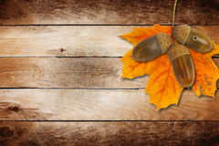 Old grunge paper with autumn oak leaves and acorns Royalty Free Stock Photos