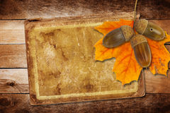 Old grunge paper with autumn oak leaves. And acorns on the abstract background Royalty Free Stock Images