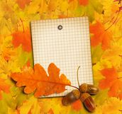 Old grunge paper with autumn oak leaves and acorns. On the abstract background vector illustration