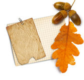 Old grunge paper with autumn oak leaves and acorns on the  white Stock Photos