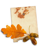 Old grunge paper with autumn oak leaves Stock Image