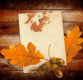 Old grunge paper with autumn oak leaves and acorns Royalty Free Stock Photography