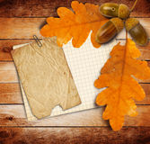 Old grunge paper with autumn oak leaves and acorns Stock Photo