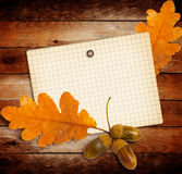 Old grunge paper with autumn oak leaves and acorns Stock Photography