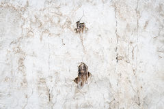 Old, grunge plaster wall texture Royalty Free Stock Image