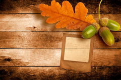 Old grunge slide with autumn oak leaves Royalty Free Stock Image