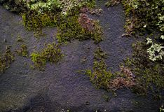 Old grunge textured stone wall background with a green moss grow Royalty Free Stock Photos