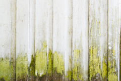 Old grunge vintage white painted wall with green moss Stock Images