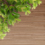 Old grunge Wood Texture with leaves royalty free stock photo