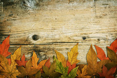 Old grunge Wood Texture. With leaves use for background Royalty Free Stock Photo