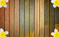 Old, grunge wooden wall with frangipani Royalty Free Stock Images