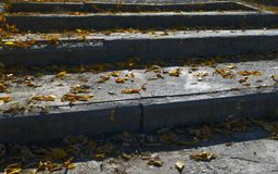 Old Grungy Concrete Stairway, Steps Covered With Yellow Leaves. Old Grungy Concrete Stairway, Steps Covered With Yellow Leaves stock images