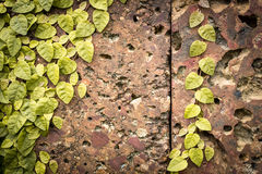 Old grungy stone wall with green leaves. Stock Image