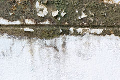 Old grungy wall with mold Stock Images