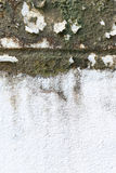 Old grungy wall with mold Royalty Free Stock Image