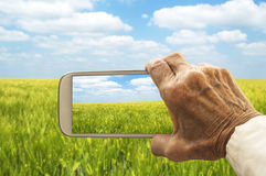 Old hand taking photography of green wheat field Royalty Free Stock Image