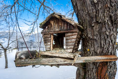 Old handmade nesting box on tree at snowy winter day Royalty Free Stock Photos