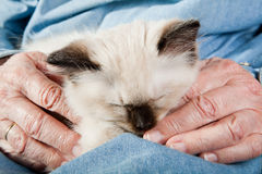 Old hands holding a kitten Stock Photography