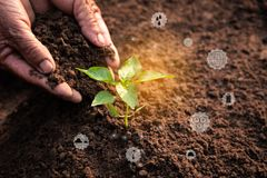 Old hands planting a green sprout in soil ground with icon about environment on image royalty free stock images