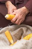 Old Hands With Corn Royalty Free Stock Image