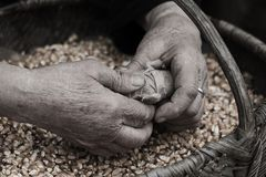 Free Old Hands Working Stock Photography - 40683132