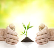 Old hands and young plant Royalty Free Stock Image