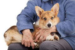 Old hands and young puppy Stock Photo