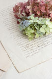 Old handwriting and soft hortensia flowers Stock Image