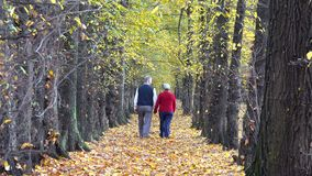 Old happy couple together on autumn alley, ever lasting love, romantic. UHD 4K stock footage
