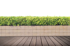 Old hardwood decking. Or flooring and plant in garden decorative  background , copy space above Royalty Free Stock Photography