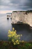 Old Harry beauties - Dorset coast, England Stock Image