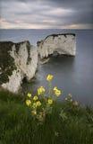 Old Harry Rocks - Dorset coast, England Stock Photos