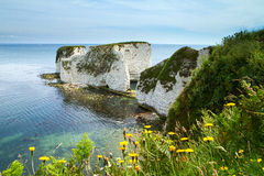 Old Harry Rocks Studland Royalty Free Stock Photography