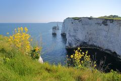 Old Harry Rocks, white cliffs  located at Handfast point near Swanage Royalty Free Stock Image