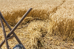 Old harvest tool, scythe and wooden rake. Royalty Free Stock Image